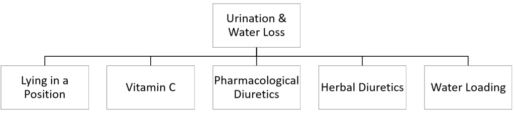 Urination and water loss