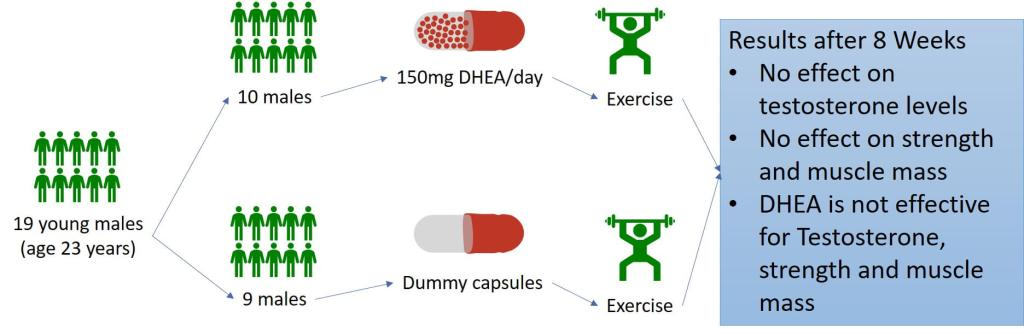 Effect of oral DHEA on serum testosterone and adaptations to resistance training in young men.
